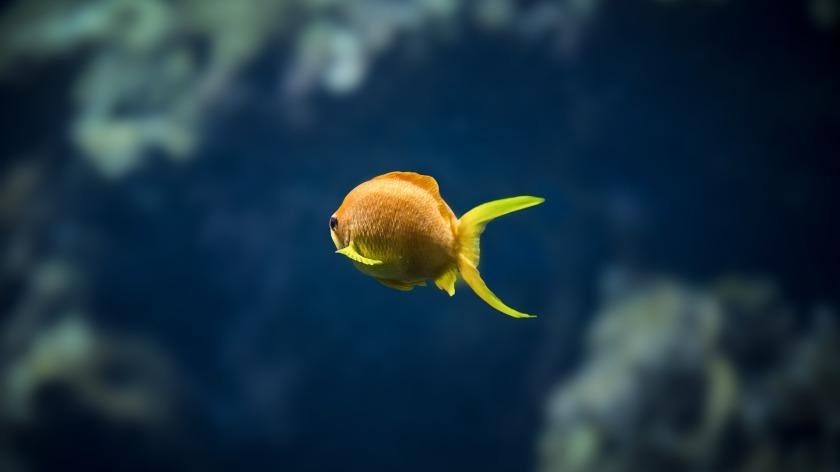 underwater-3058206_1920